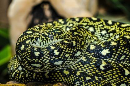 snake-peptide